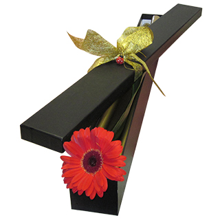 Romantic Basket - Send a Basket - p-337-single-gerbera.jpg-copy