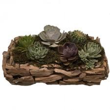 gift- basket-send -a-basket-beautiful-succulents