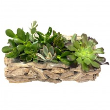 plant-send-a-basket-beautiful-succulent