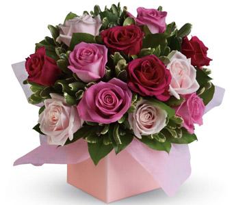 petals blushing roses R19 85