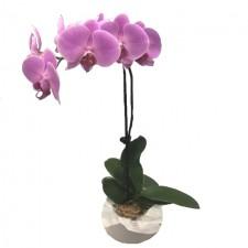 flowers-send-a-basket-beauty